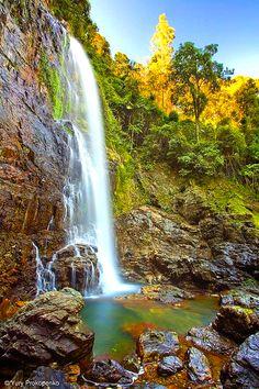 Cedar Falls,Dorrigo National Park,NSW,Australia.