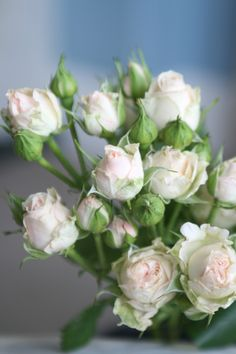 Peach spray roses.  Variety-Jana