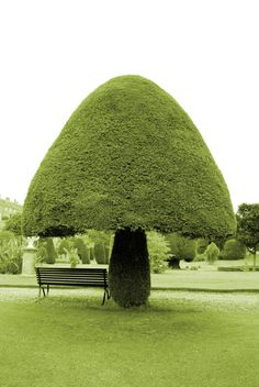Topiary in Drummond Castle Gardens, Crieff, UK