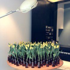 Aesop celebrates spring