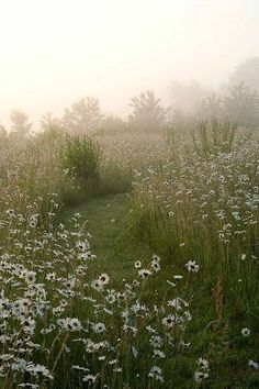 Meadow areas are a great way to bring the landscape into the garden Landscape Drawings, Landscape Design, Garden Design, Summer Landscape, Patterns Background, Fotografia Macro, Low Maintenance Landscaping, Landscape Background, Nature Aesthetic