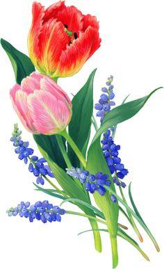 Tulpaner och pärlhyasinter