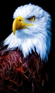 Tier Wallpaper, Eagle Wallpaper, Animal Wallpaper, Wallpaper Pictures, Mobile Wallpaper, Bokeh Wallpaper, Pastel Wallpaper, Iphone Wallpaper, Wallpapers
