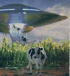 How many cows have supposedly been abducted by aliens? Though unsolved cattle abductions and mutilations still occur regularly, the widespread belief in UFO cattle abductions likely had its origins in a well-publicized hoax by a Kansas rancher in 1897. http://www.alieneight.com/aliens-love-cows-%E2%80%93-the-story-behind-alien-cow-abduction.htm