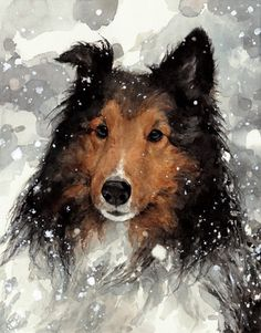 Commissioned watercolor dog portrait of a collie in snow - Custom pet portraits. Painted from your photo on heavy weight, archival watercolor… Art Watercolor, Watercolor Animals, Watercolor Portraits, Art And Illustration, Illustrations, Dog Portraits, Animal Paintings, Dog Art, Amazing Art