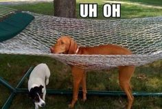 Funny pictures of the day (34 pics)