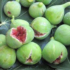 Smyrna figs