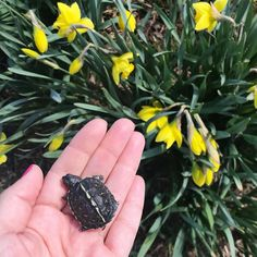 baby turtle @peonytheturtle Baby Turtles, Wood Watch, Wooden Clock