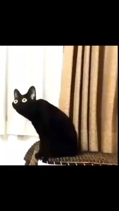 when u a cat – Memes Funny Animal Jokes, Funny Animal Videos, Cute Funny Animals, Funny Animal Pictures, Animal Memes, Funny Cute, Haha Funny, Memes Estúpidos, Funny Video Memes