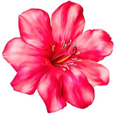 Pink flower png by hanabell1 on deviantart wallpapers and more exotic pink flower png clipart picture mightylinksfo