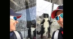 """As a mail carrier, one would think that dogs would be their natural enemies... but this cat puts them all to shame. (Scroll down for BOTH videos! """"Every day"""