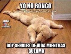 Fotos para imitar - International Tutorial and Ideas Funny Animal Memes, Dog Memes, Funny Animals, Funny Quotes, Cute Animals, Funny Spanish Memes, Spanish Humor, Funny Images, Funny Pictures
