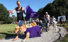 Costumed canines show Halloween spirit in Dogs For Life Pawrade - w/photos and video #IndianRiverCounty