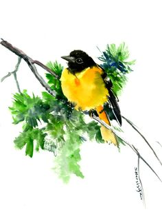 Baltimore Oriole, bird art, bird painting, watercolor birds, oriole bird, original watercolor painting bright yellow green wall art by ORIGINALONLY on Etsy