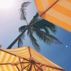 summer   orange beach umbrellas, layin' underneath the palm trees