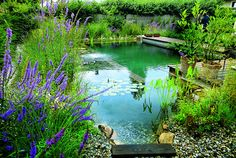 Natural Swimming Pools are a DIY project I might try this Spring... #Pools #Gardens