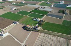 Huerta de Valencia Urban Farming, Paella, Shanghai, Spain, Amor, Valencia Spain, Agriculture, Vegetable Garden, Community