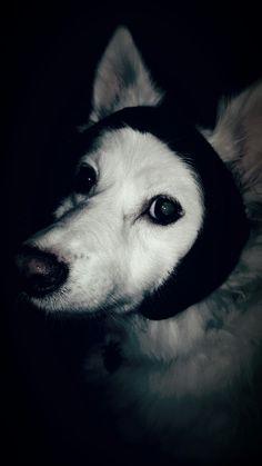 My Girl...Niki Dogg.