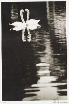 Zoo Descriptive: 2 swans in love Aldo Sessa (Argentina, born 1939) 1978, printed 1989 Photographs Gelatin-silver print Gift of the artist (M.2006.61.16)