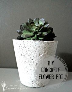 DIY Concrete Flower