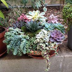 Plants, Succulents