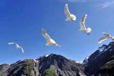 full gull gaze | Flickr - Photo Sharing!