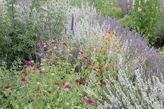 Obwohl sie nur wenig Wasser benötigen, bringen viele Arten mit weißen, roten und violetten Blüten wohltuende Frische in den Garten