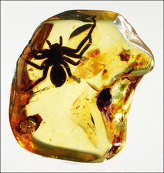 Fossil spider inside amber