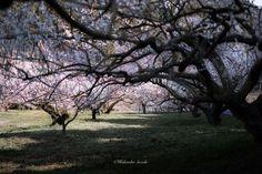 Crédit photo : Hidenobu Suzuki