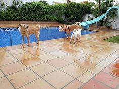 Ratos en casa con Monty, Koke, Brown, Brenda y Chico 04/17