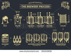 Vector beer infographics with illustrations of brewery process. Brewery…