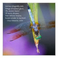 Shop Curious Dragonfly Poem - poster / print created by Personalize it with photos & text or purchase as is! Dragonfly Quotes, Dragonfly Wings, Dragonfly Necklace, Dragonfly Images, Grieving Quotes, Memorial Poems, Beautiful Bugs, Stuffed Animal Patterns, My Images