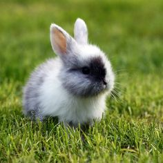 45 Bunny Picture There is so much fun and lovely moment! These bunny pictures are captured by some of the amazing photographers, animal lovers. The Animals, Cute Little Animals, Cute Funny Animals, Cute Baby Bunnies, Funny Bunnies, Cute Babies, A Bunny, Tiny Bunny, Netherland Dwarf Bunny