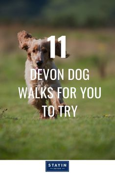 From picturesque paths in the North to Mid Devon's forests full of fir, via perfect parks in South Devon – there's a Devon dog-walking location perfect for you. Here are 11 suggestions for fantastic dog walks in Devon. Devon Devon, South Devon, Devon Holidays, Is 11, Plan Your Trip, Dog Walking, Holiday Destinations, Forests, Beautiful Beaches