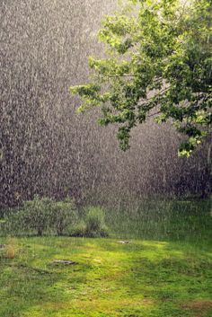 Looks like spring! Can't wait! Also a terrific article attached: Taking Photos of Rain by Digital Photo Secrets