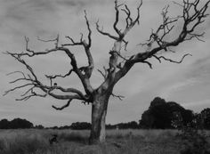 goth tree and roscoe Hampstead Heath, Dog Walking, Goth, Mountains, Nature, Travel, Naturaleza, Trips, Goth Subculture