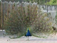Zoo garten Heilderberg, de Besucherinformationen