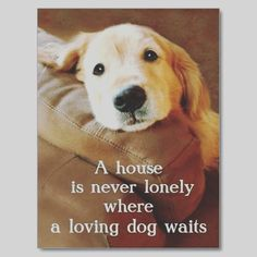 Very Few Humans Know Wgat Unconditional L♡VE Is, But Dogs Live To L♡VE  Unconditionally Everyday!♡♡♡Golden Retriever A House Is Never Lonely Post  Cards ...