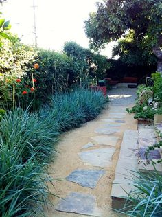 Love the stonework for backyard. the walkway is lined with a sweep of steely-blue Leymus grass and rosemary, and it's anchored with dwarf citrus trees. Water Wise Landscaping, Backyard Landscaping, Backyard Patio, Landscaping Ideas, Desert Backyard, Backyard Ideas, Hedges, Landscape Design, Garden Design