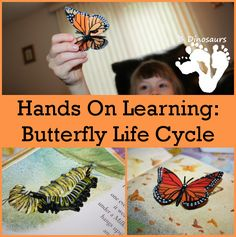 Hands On Learning: Butterfly Life Cycle - reading a book with hands on matching - 3Dinosuars.com