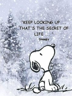 ♥ snoopy wisdom ~ keep looking up.that's the secret of life ~ quotes & wisdom Motivacional Quotes, Snoopy Quotes, Quotable Quotes, Great Quotes, Quotes To Live By, Inspirational Quotes, Nice Quotes For Friends, Look Up Quotes, Advice Quotes