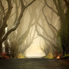 The Dark Hedges line Bregagh Road, just SW of Armoy, Co. Antrim (Northern Ireland). This avenue of was planted by the Stuart family in 18th century to impress visitors approaching their mansion, Gracehill House. The lane is reputedly haunted by a spectral Grey Lady. Thought you'd like to know. :)