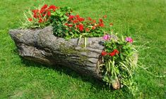 DIY Fascinating Log Planter Ideas - Unique Balcony & Garden Decoration and Easy DIY Ideas Log Planter, Garden Planters, Planter Ideas, Garden Trellis, Balcony Garden, Beautiful Gardens, Beautiful Flowers, Garden Images, Dream Garden