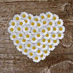 """coeur printanier""♥ Heart In Nature, Heart Art, I Love Heart, Happy Heart, My Flower, Flower Power, Sunflowers And Daisies, Blossom Garden, Daisy Love"