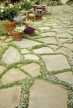 Stepping stones with creeping thyme