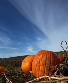 The Great Pumpkin? Middlefield, Connecticut | (pinned by haw-creek.com)