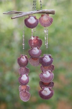 Wind chime made with Oregon Driftwood and Scallop Shells attched with eye screws Seashell Wind Chimes, Diy Wind Chimes, Seashell Art, Seashell Crafts, Beach Crafts, Seashell Projects, Carillons Diy, Blowin' In The Wind, Scallop Shells