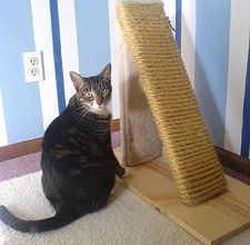 DIY Cat Scratch Post