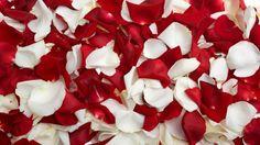 HD Hintergrundbilder blütenblätter rot weiß viele, desktop hintergrund