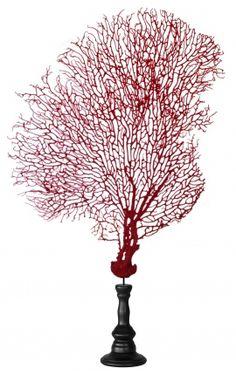 Gorgone rouge (corail) sur balustre en bois